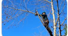 Rendez-vous et conseils forestiers